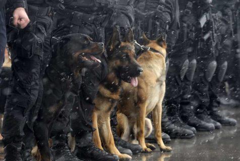 Tipos de policías nacionales, ¿que puesto puedes ocupar?
