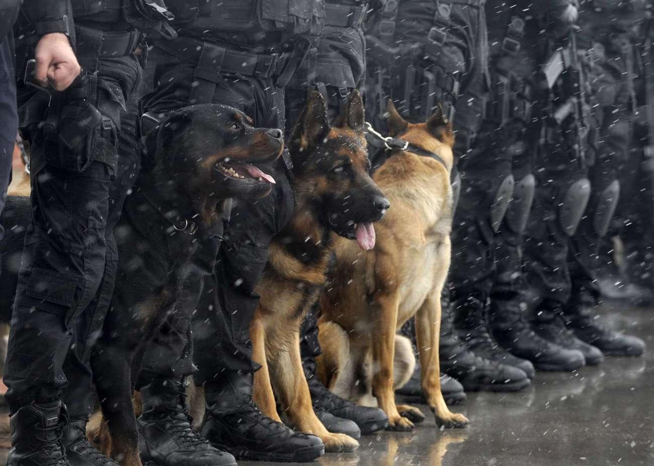 tipos de policia nacional